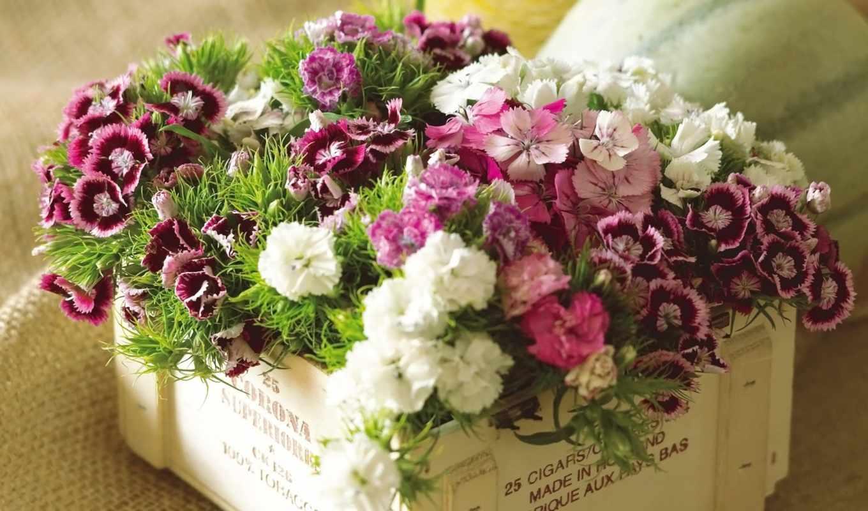 букет, cvety, martha, красивый, carnation, искусственный, цветы, сможете, клипарт, akspic