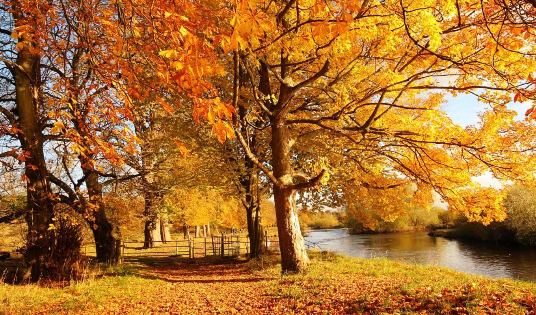 scotland, free, осень, мотеруэлл, motherwell, download,