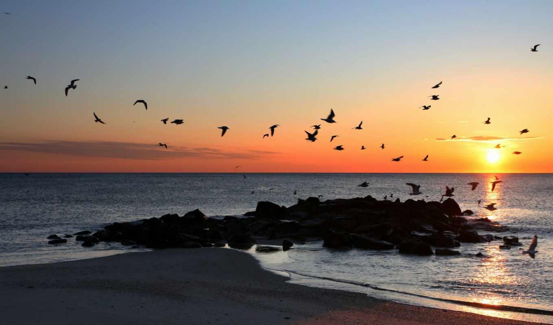 птицы, закат, море, небе, пейзажи -, заката, fone, страница,