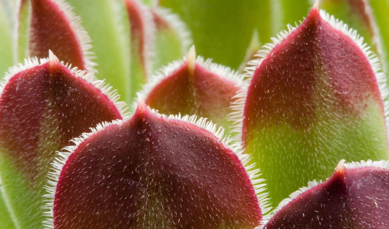 макро, зелень, лист, природа, красноватые, растения, листья,