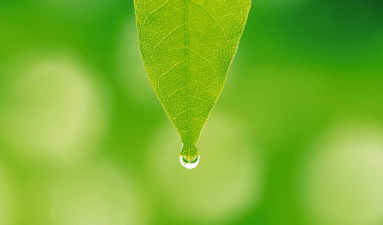 капля,лист,зелень,роса