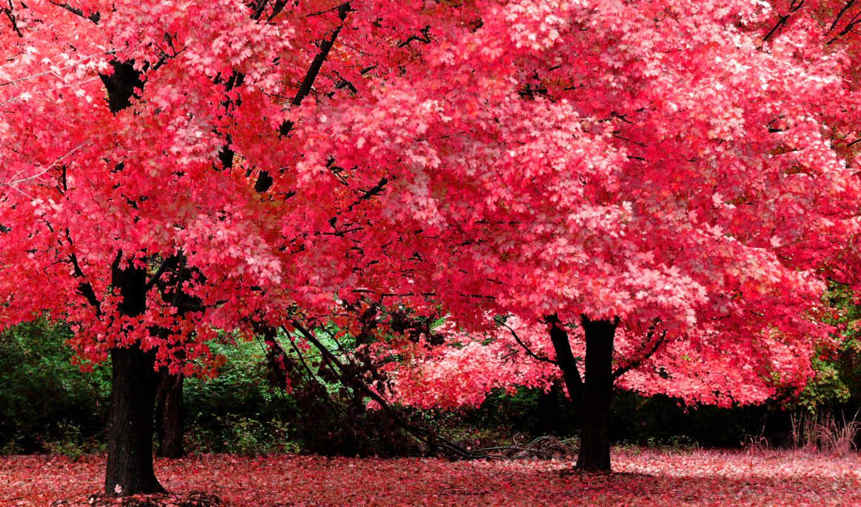 осень, картинка, красная, красивые, осени,