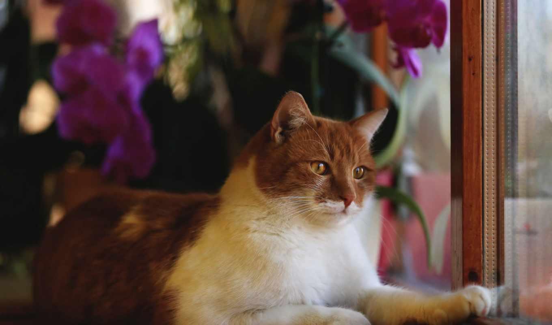 zhivotnye, кошки, коты, окно, картинкой, subject, можно, страница,