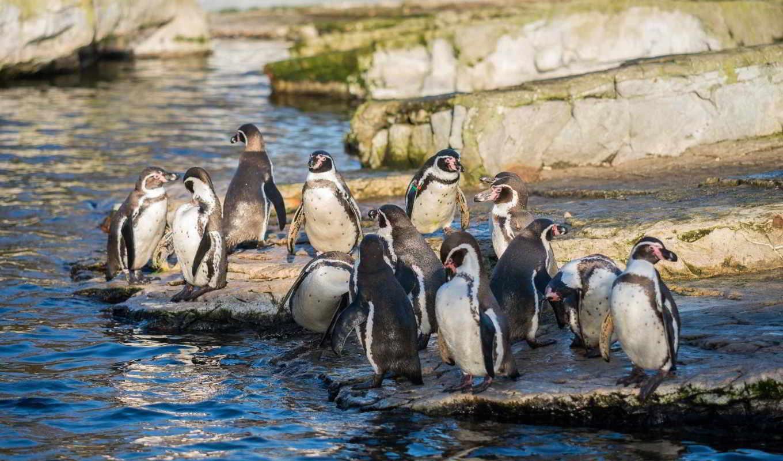 пингвины, zhivotnye, категории, телефон, овцы,