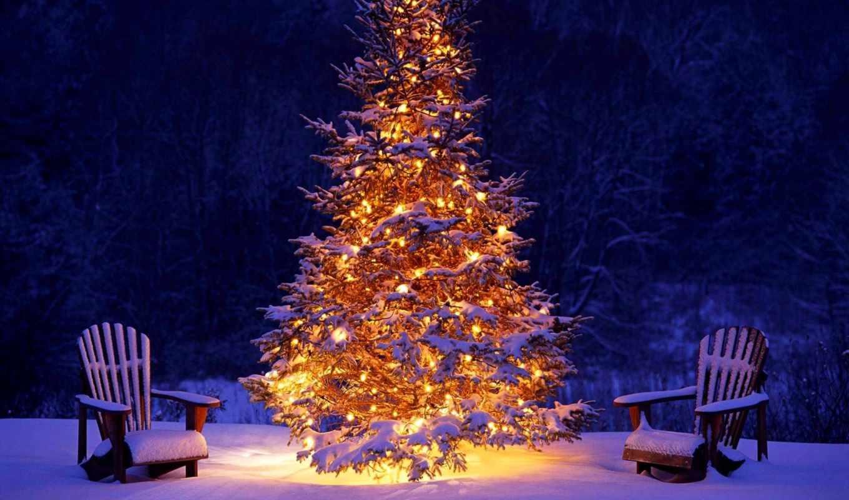 new, год, снег, живые, елка,
