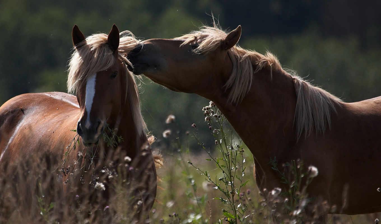 animals, лето, трава, кони, лошади, love, лошадиный, spring, картинку, wild, секрет, животные, чтобы,