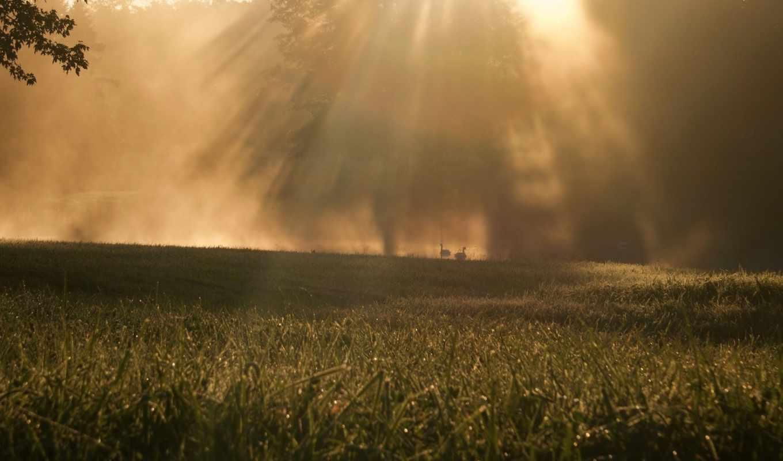 swans, лучи, солнечные, foggy, sunrise, трава, дервья, лебеди, пруд,