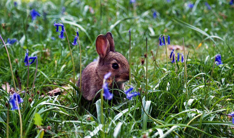 кролик, цветов, разных, разрешениях, широкоформатные,