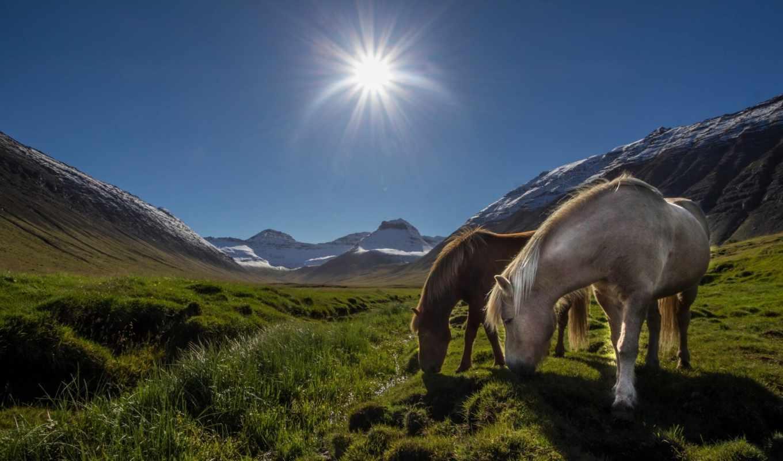 Лошади, солнце, луг, горы,