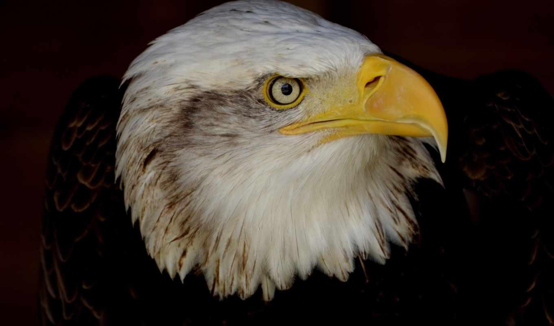 znajdziesz, голова, категории, tapet, stronę, tapetami, птица, lepszą, ponad, клюв,