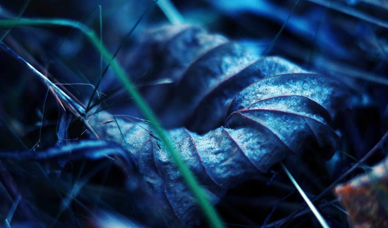 макро, лист, прожилки, сухой, земля, осень,
