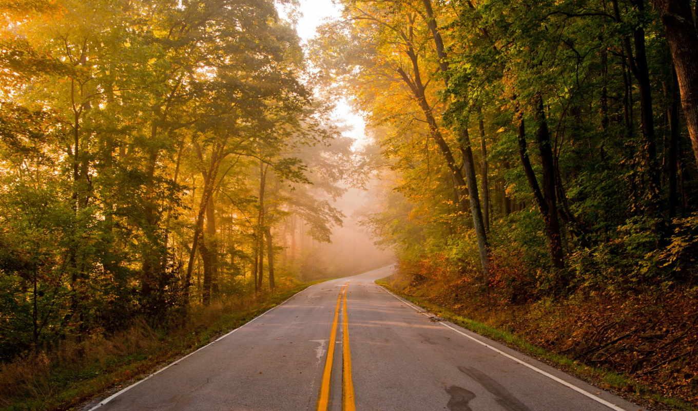 дорога, пейзаж, осень, картинка,