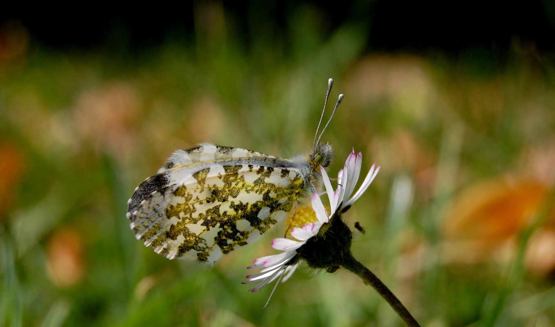 цветы, насекомые, обоев, животные, узоры, пауки, лето, бабочка,