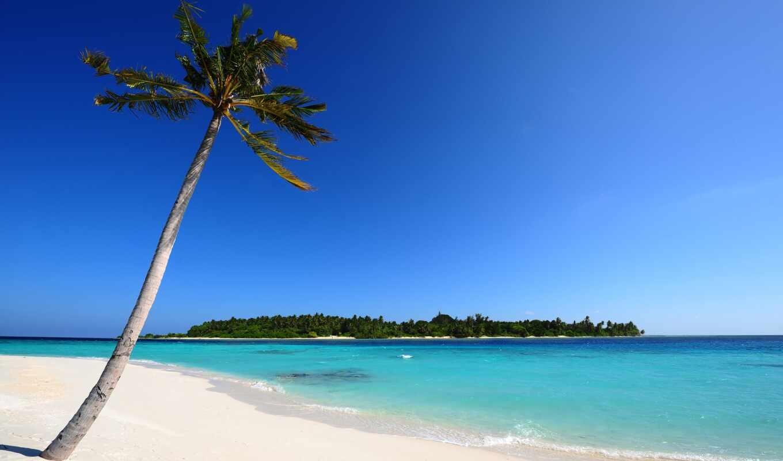 maldives, песок, пальмы, море, остров, пляж, palm,