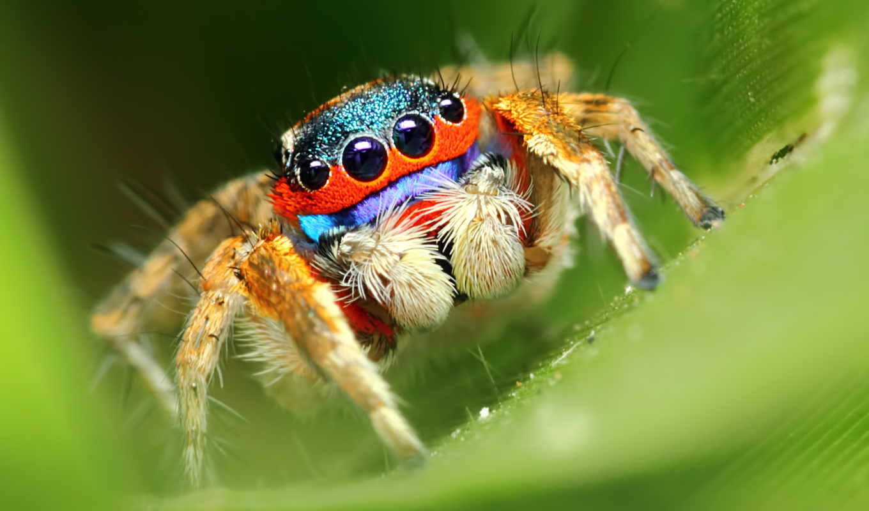 pająk, kolorowy, pulpit,