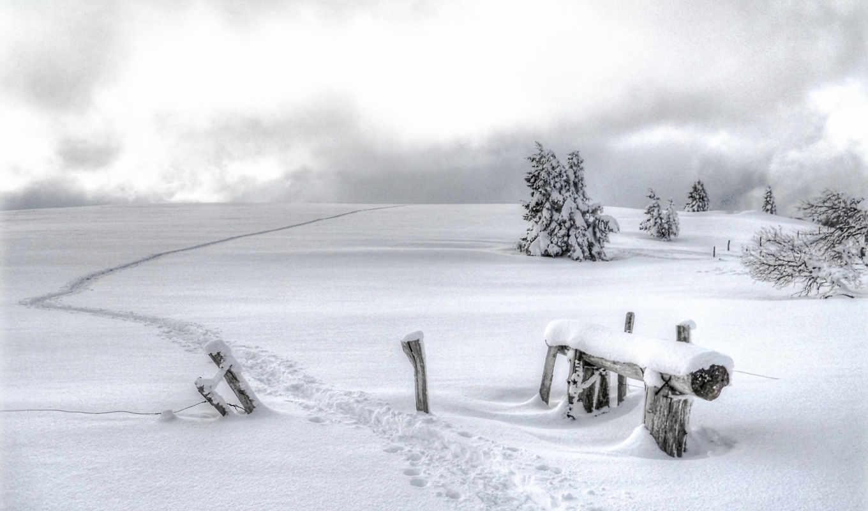 сосны, zima, снег, this, les, following, tagged, keywords, has,