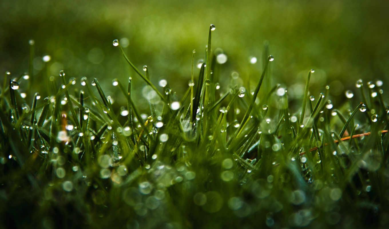 макро, капли, трава, роса, блики,