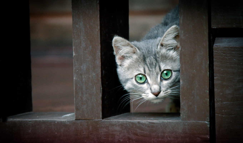 кот, животные, animals, котик, зеленые глаза,