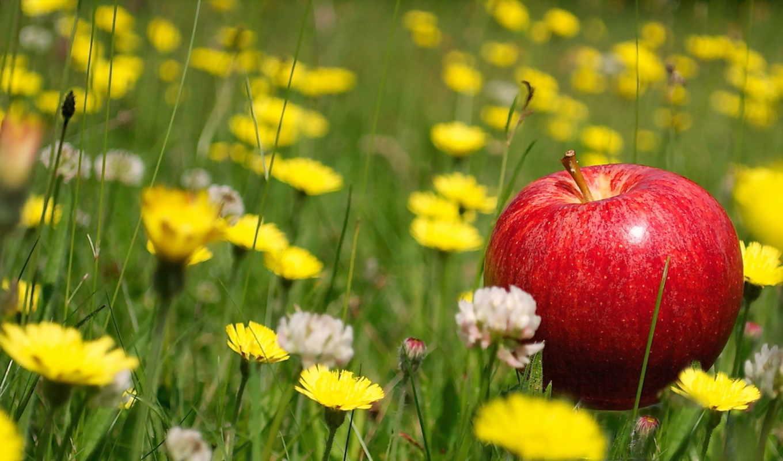 макро, июня, еда, apple,