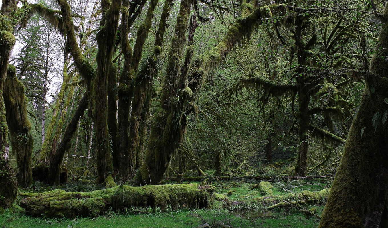 rezreshenie, зелёный, природа,