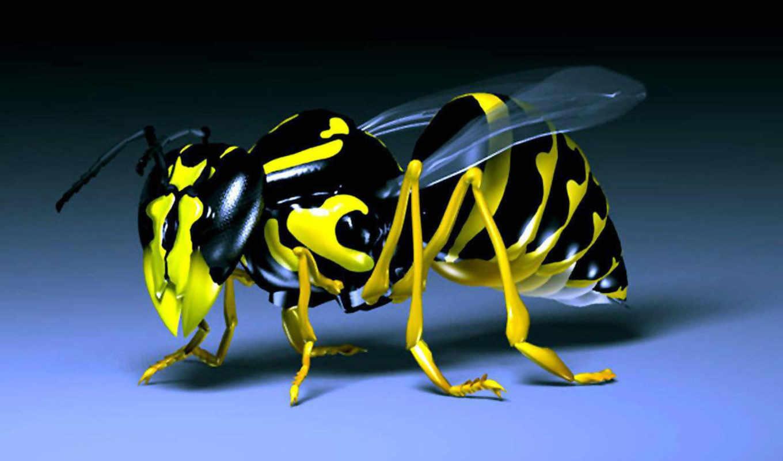 ,пчела,3д,крылья,