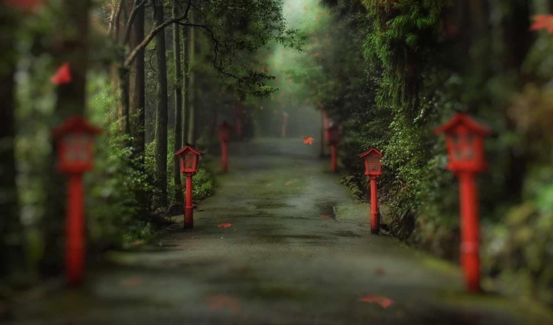 аллея, мистическая, китайском, лес, лесу, листва,