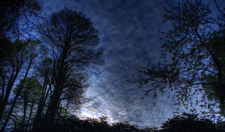 лес, ночь,
