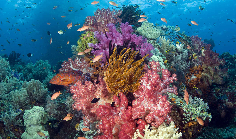 океана, водой, water, под, underwater, world, pisces, ocean,