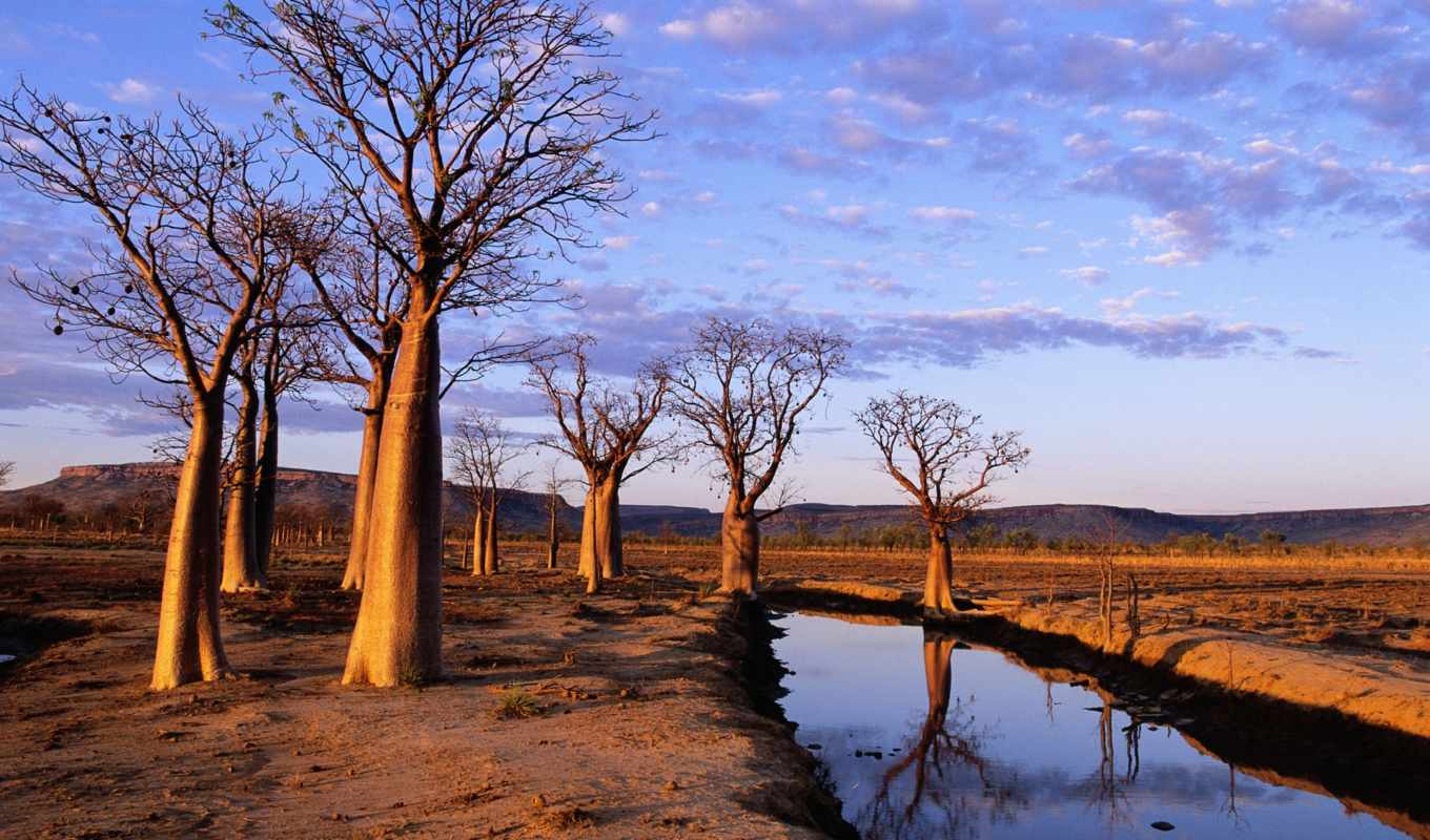 trees, windows, hd, wallpapers, wallpaper, australia, boab, gallery, and, to, кг, kimberley, plateau,