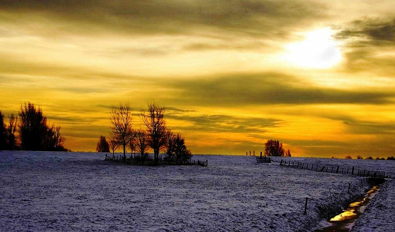 winter, this, trees, download, tree, view,