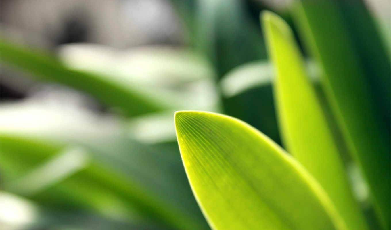трава, газон, категория, лава, совершенно, дек, природа, kkt,
