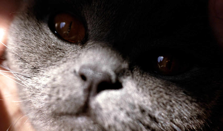 animals, mcandrew, кот, blue, nell, hazır, флаг,