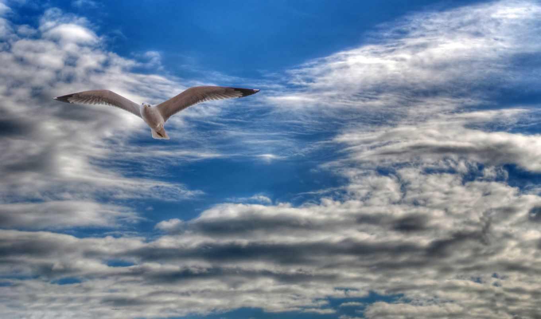 чайка, парящая, небе, небо, oblaka, от, широкоформатные, priroda,