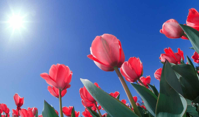 parede, papel, flores, lindas, tulipas,