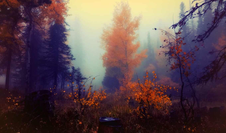 осень, дерево, живопись, краска, лес, туман, smartphone