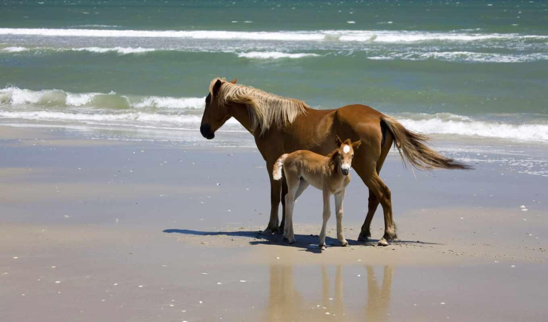 caballo, animale, una, атлантический, город, ruether, идея, орлан, saber, ante