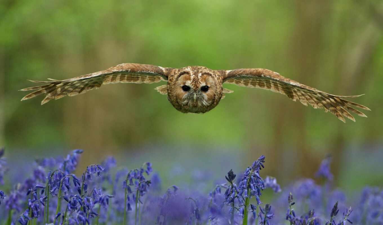 сова, цветы, oir, птица, animal, луг, weed
