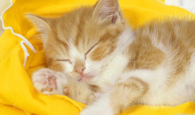 спит, котенок, ты, тест, все, котята, обои, спать,