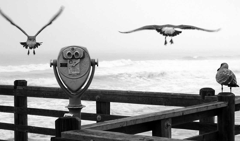 чайки, белая, бинокль, причал, чёрно, birds, animals, flying, homepage,