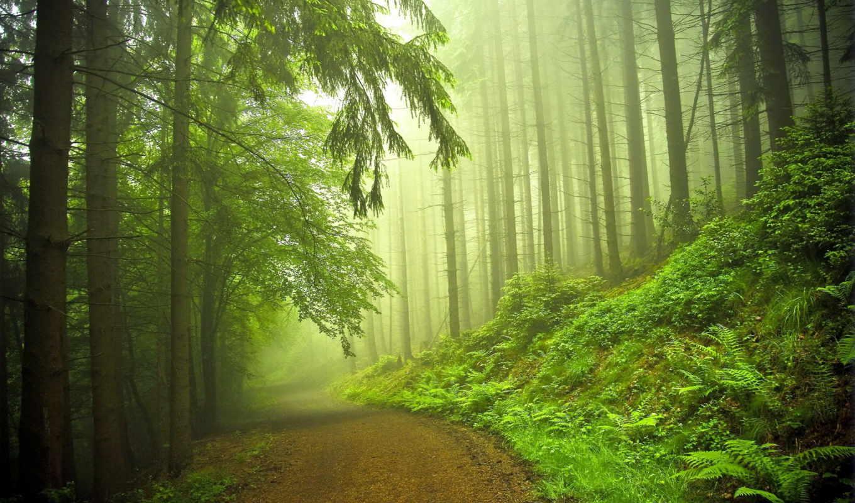 нужный, высокого, les, качества, сайте, этого, нашем, выберите, лесу,