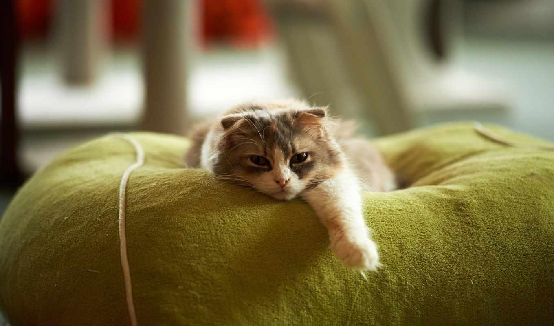 кот, лапа, котенок, кошки, лапы, red, картинка,