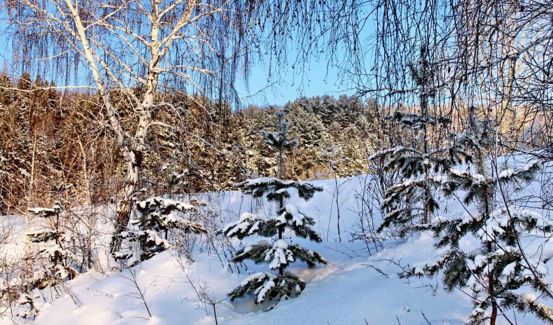 снег, winter, береза, природа, branch