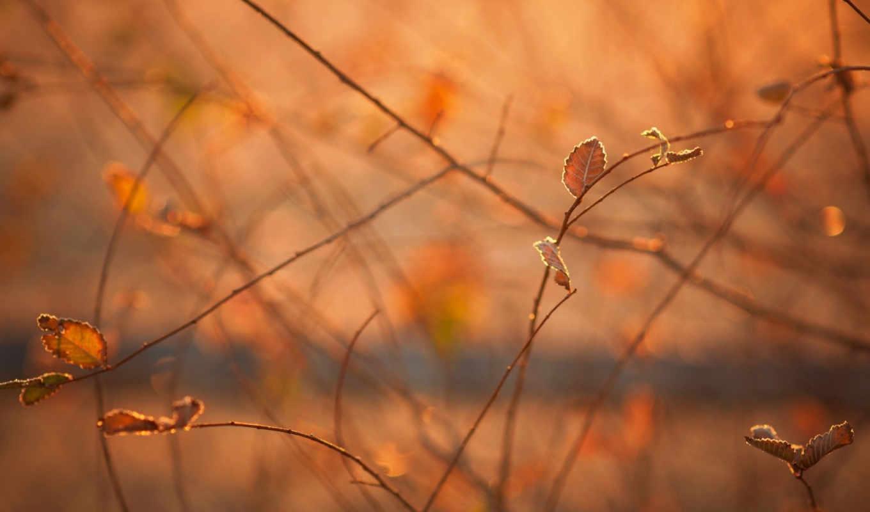 осень, макро, утро, свет, листва, ветки,