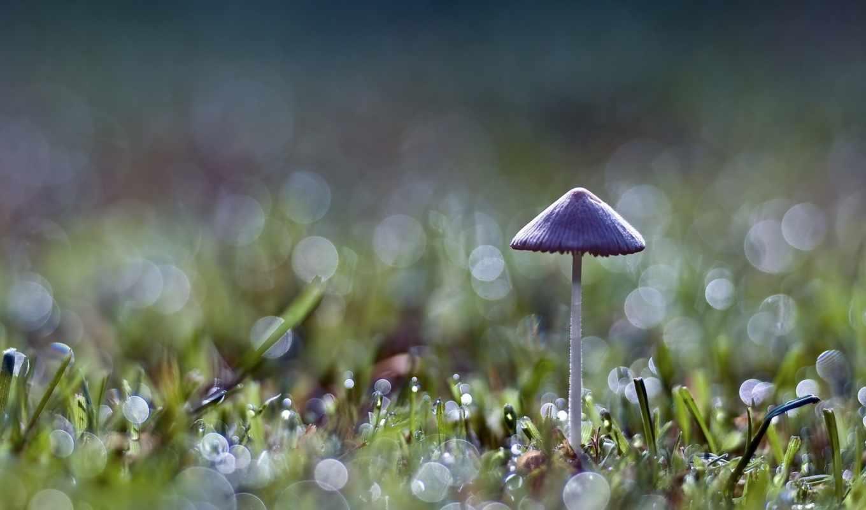 гриб, трава, серый, зелёный, новости,