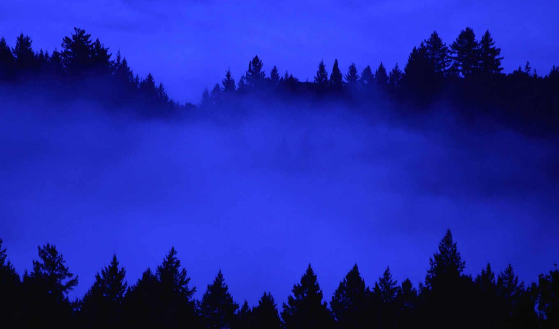 california, fog, bay, forest, area, dawn, nature,