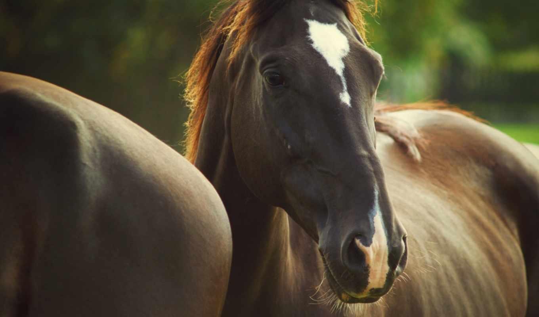 лошади, color, грива, морда, поле, лошадь, цветы, пятна, трава,