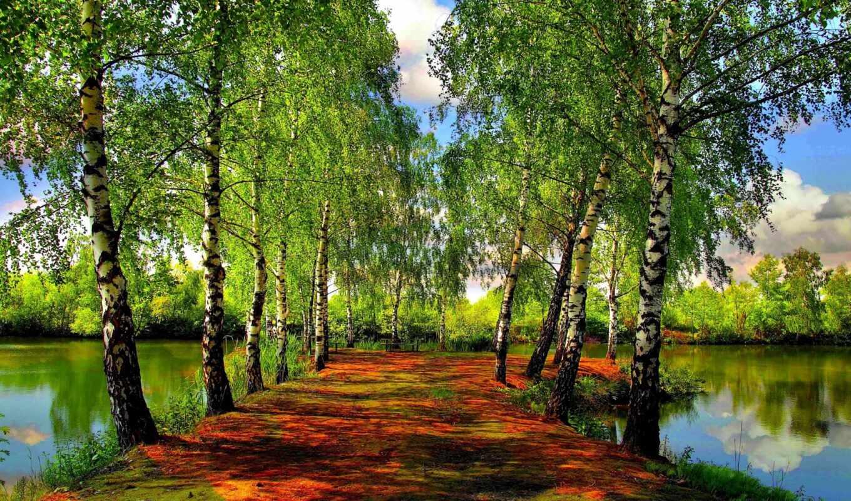 водоём, зелень, деревья, озеро, березы, весна, речка, красивые, картинка, природы,