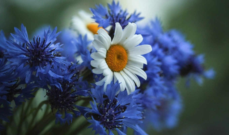 цветы, красивые, пейзажи -, пляжи, июня, летние,
