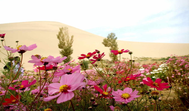 цветы, summer, марта, природа,