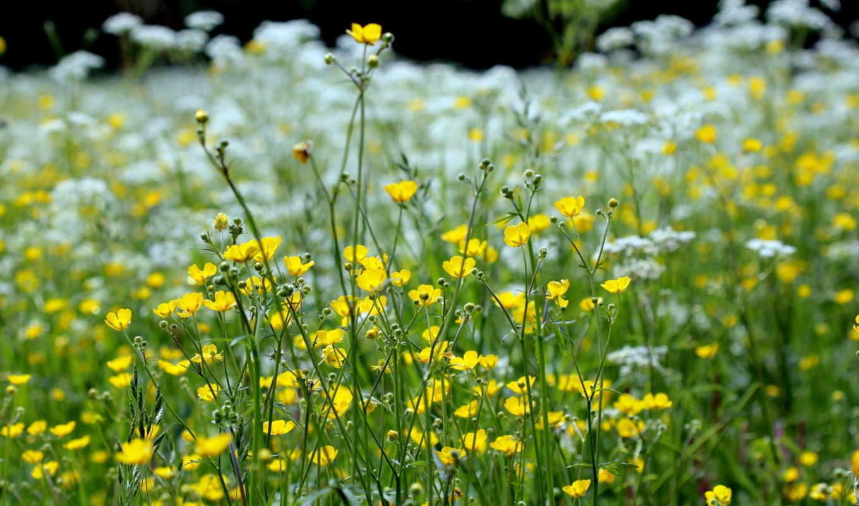 природа, весна, травы, макро,
